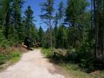 lumber-before2