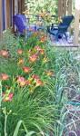 mom's lilies