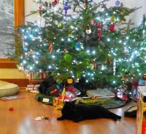 boo under the tree