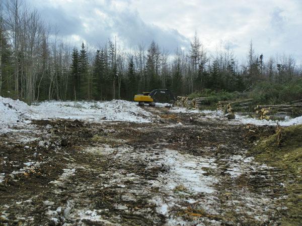 Logging Company Moves In