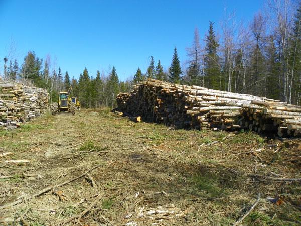 A Muddy Logging Operation