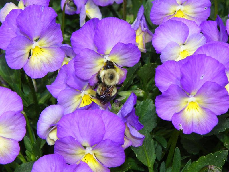 Big Bumble Bee