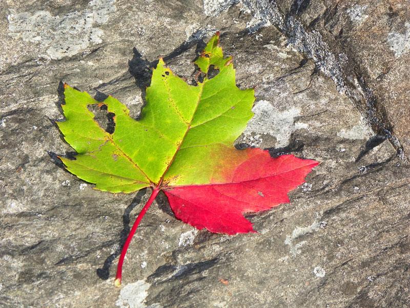 Early Autumn Sunday Snapshots