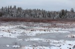 Frozen March Marsh