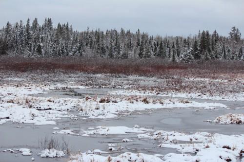 Frozen March Marsh