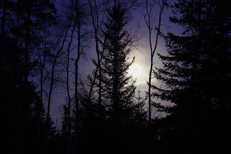A Maple Sugar Moon