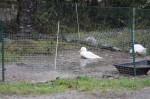 rain made pond
