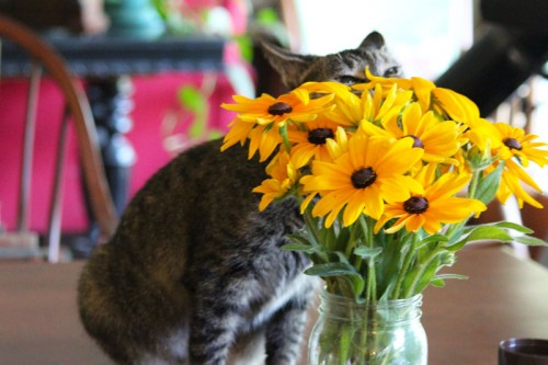 Cat sniffing the bouquet