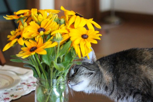 Cinder Checking Out the Flowers