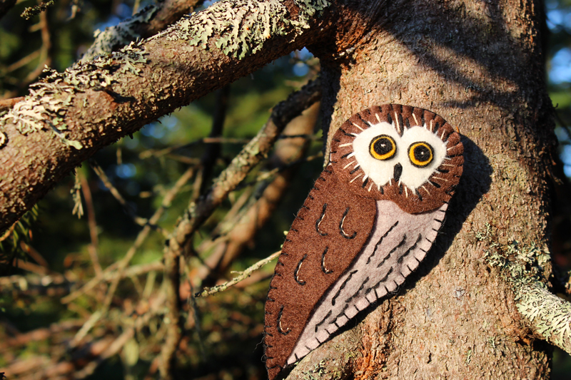Meet the Tiny Northern Saw-whet Owl
