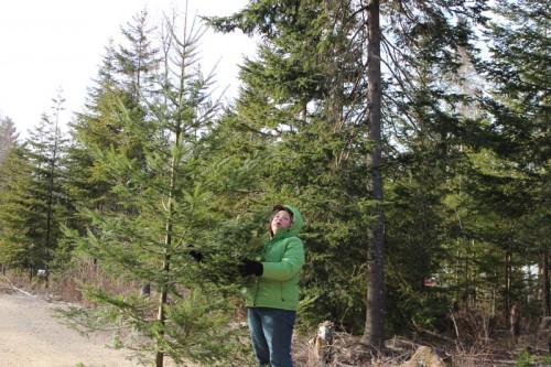 2012-tree-cutting-3
