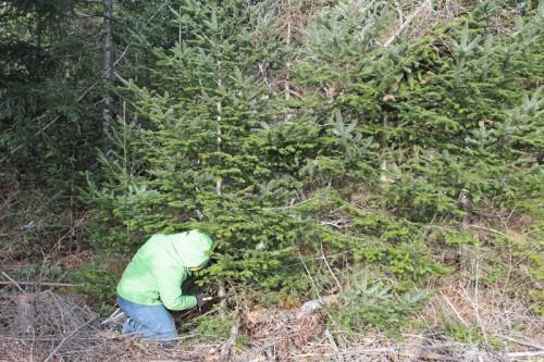 2012-tree-cutting