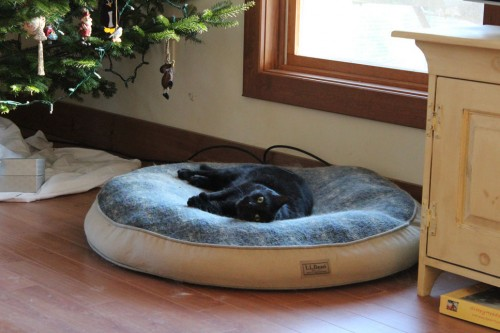 Snape the Cat in the dog's bed