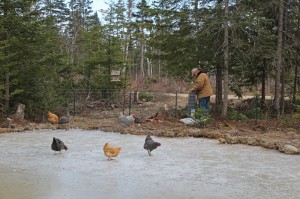 building a fence around the duck pond