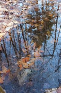Reflection of a fir tree
