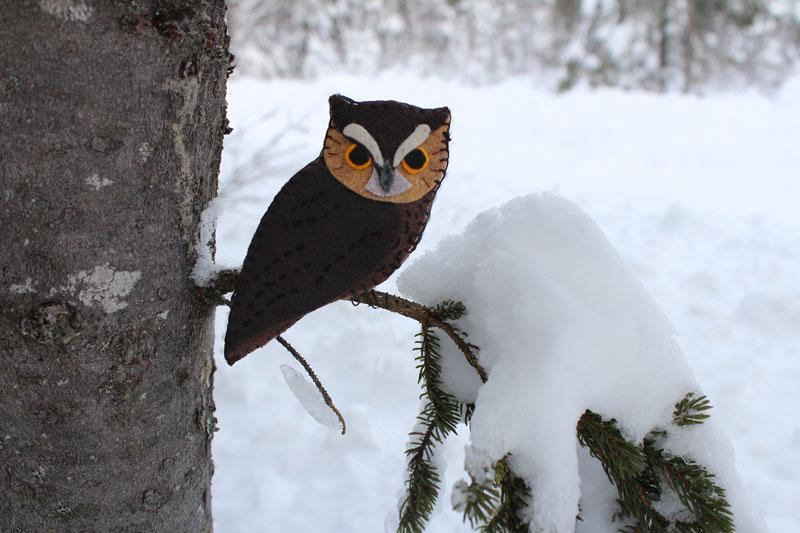 The Fearless Eastern Screech Owl