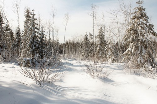 snowshoe5