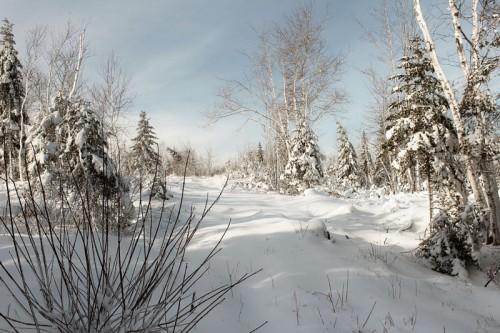 snowshoe7