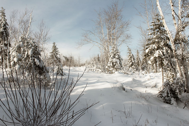 Snowshoeing the Back 40
