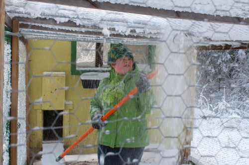snowy-coop