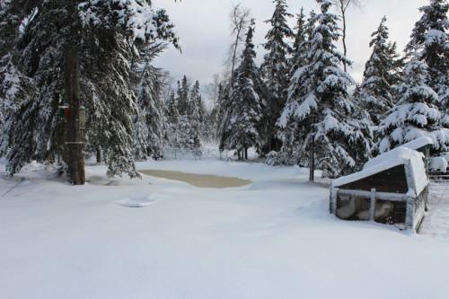 snowy-pond