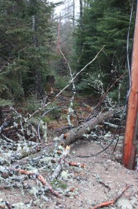 tree down on the power and phone line