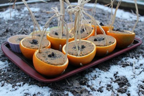orange bird feeders