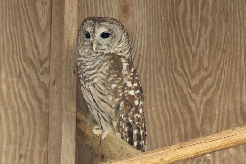 Owl at 3 am