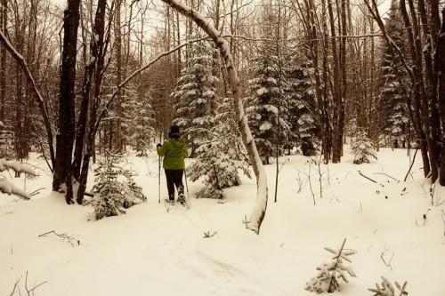 saturday-snowshoe
