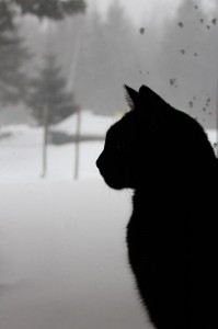 Snape in Silhouette