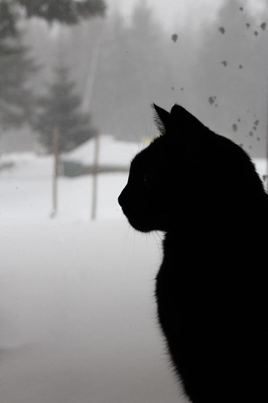 Silhouette of Purfessor Snape