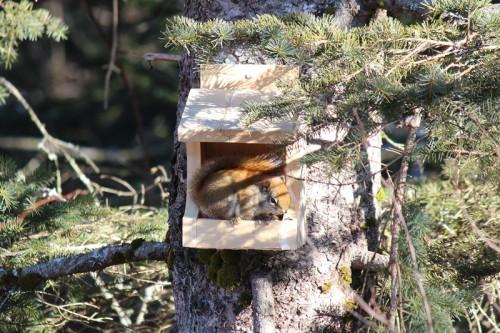 squirrel at dinky bird feeder