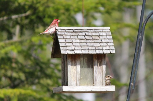 birds-112