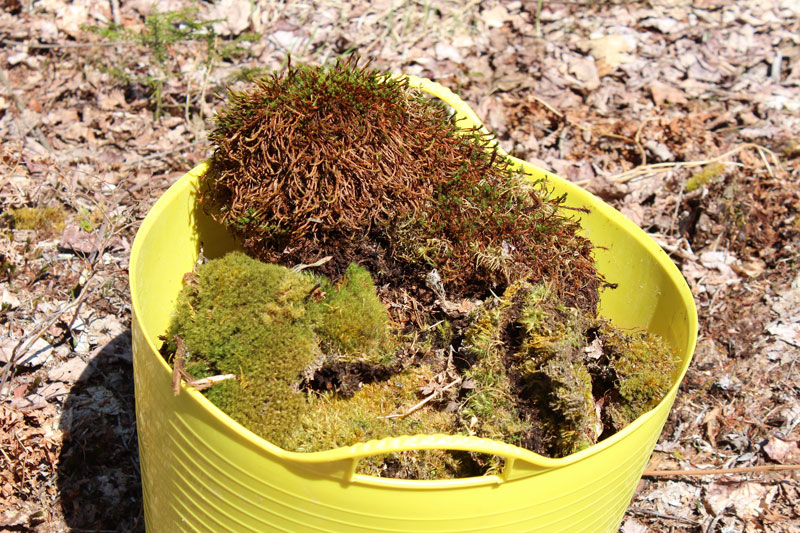 The Moss-Lined Raised Garden Experiment