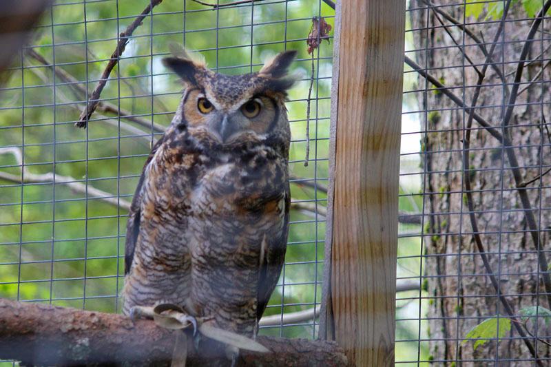 Owling at Birdsacre
