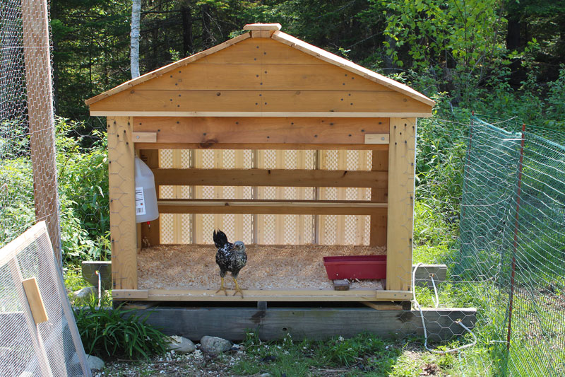 A Halfway House for Chickens