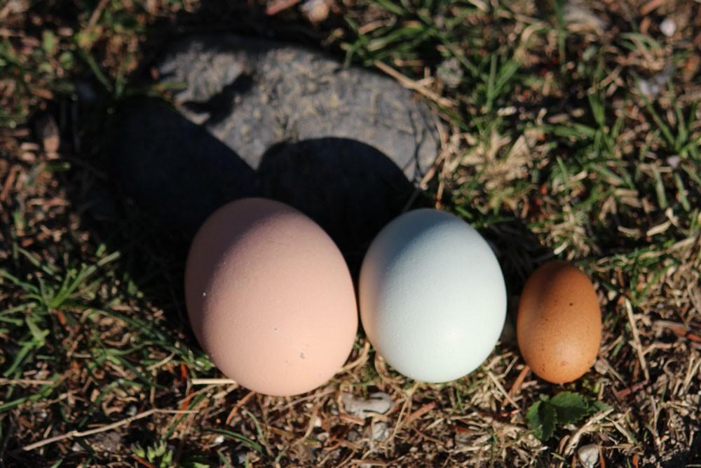 The Littlest Egg