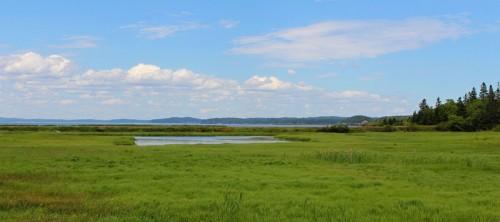 Gleason Cove View