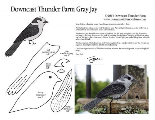 gray-jay-pic