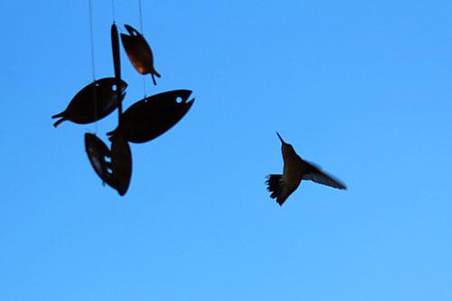 birds-388