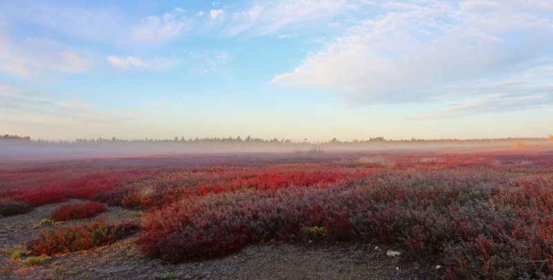 Autumn Barrens in the Mist