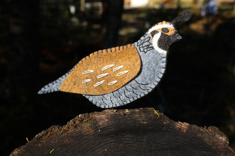 The Quaint California Quail