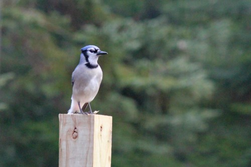 birds-068
