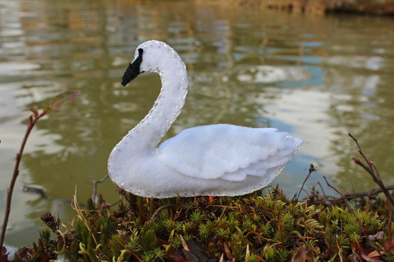 The Elegant Trumpeter Swan