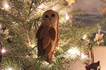 Barn Owl on Tree