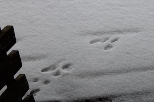 bunny-tracks