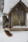 squirrel2