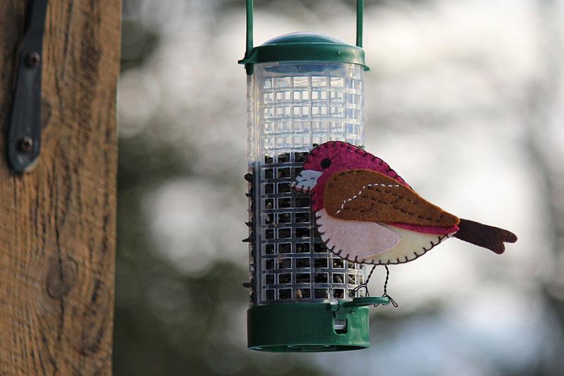 The Pretty Purple Finch