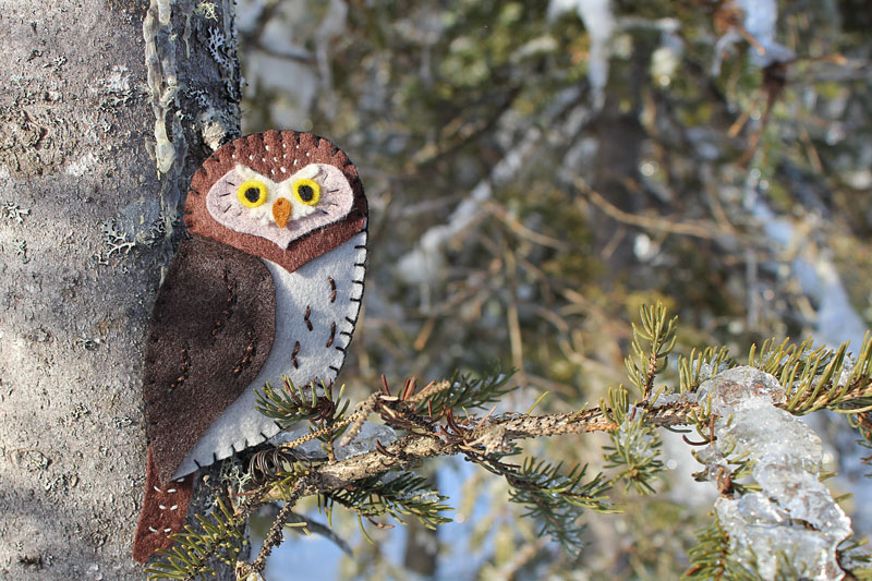 The Precious Pygmy Owl