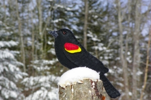 red-winged blackbird felt ornament